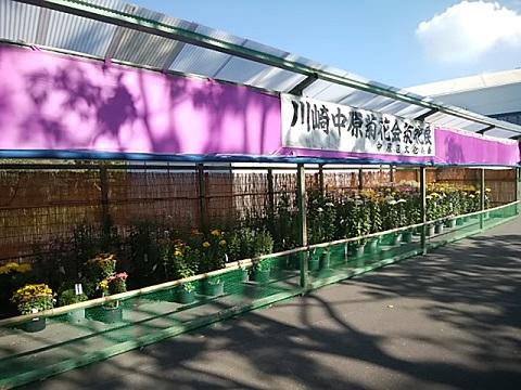 川崎中原菊花展