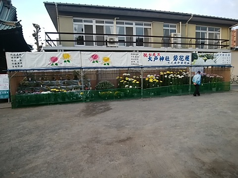 大戸神社菊花展