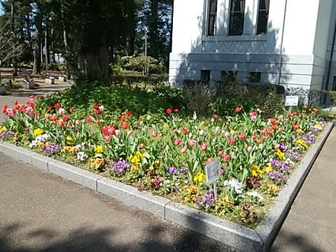 大倉山公園のチューリップ
