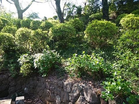 増福寺のツツジ山