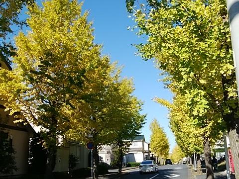 荏子田のイチョウ並木