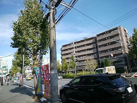 新横浜通り片倉町のイチョウ並木