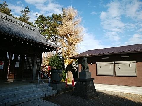 松見八幡神社イチョウ