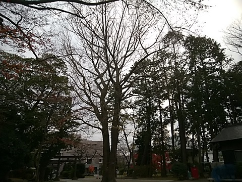 宮内春日神社イチョウ