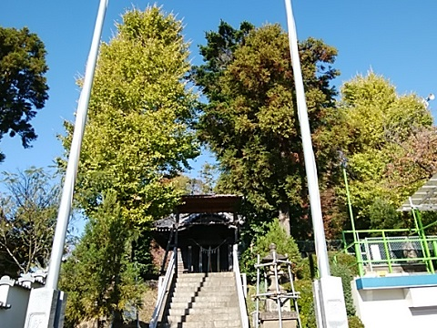 中山杉山神社イチョウ