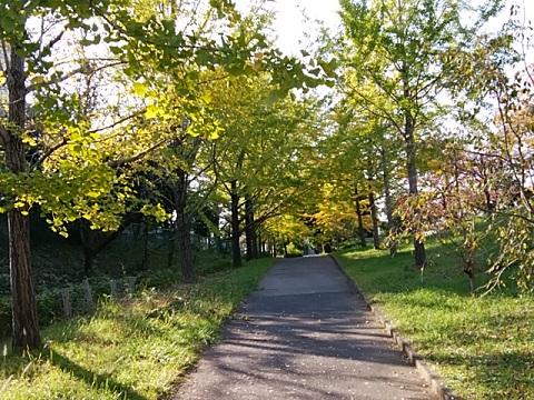 虹ヶ丘公園イチョウ