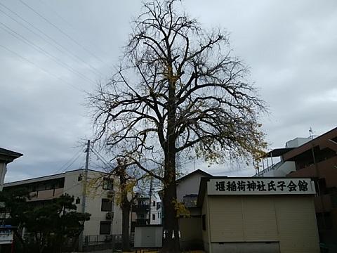 多摩区堰稲荷神社イチョウ