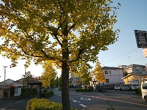 新栄町から勝田町のイチョウ並木