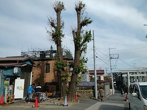 鶴見区末吉神社イチョウ