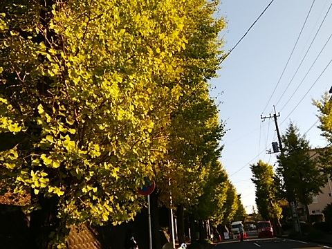 竹山団地中央商店街のイチョウ並木