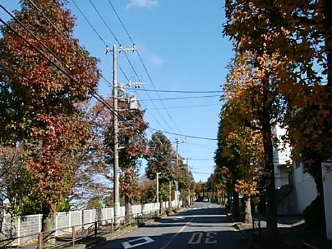 寺尾台1丁目モミジバフウ