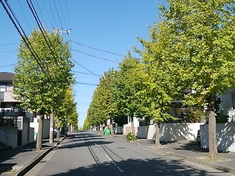 梅が丘のイチョウ並木