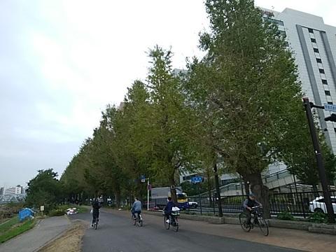 府中街道イチョウ並木