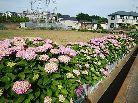 高田町松山花壇