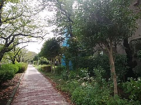 今井上町緑道