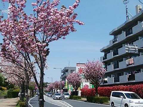 奈良4・5丁目関山並木