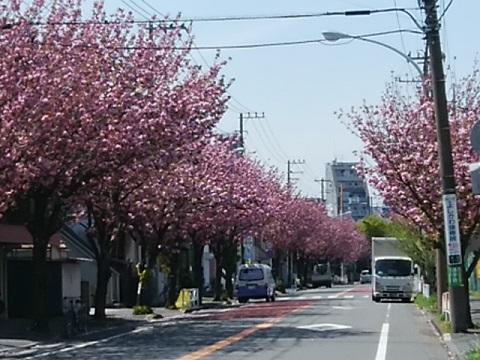 桜川公園前関山並木