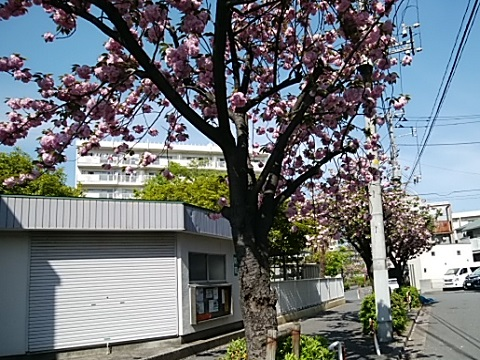 鶴見中央2丁目関山並木