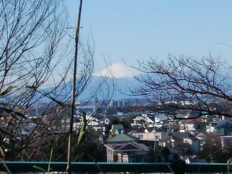 獅子ヶ谷市民の森富士山