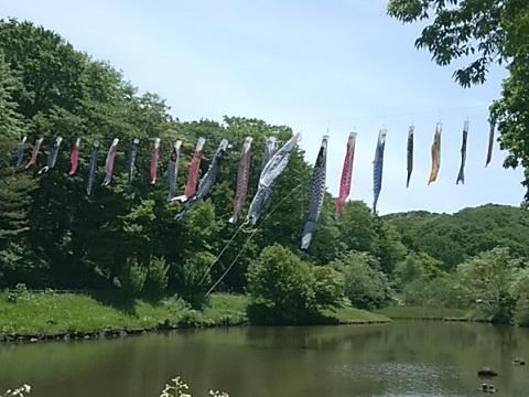四季の森公園の鯉のぼり