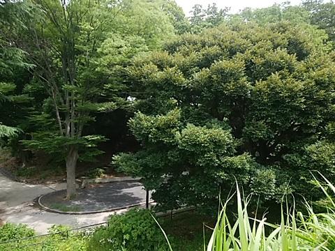 藤が丘第二公園