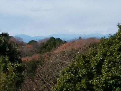 四季の森公園奥多摩・奥秩父