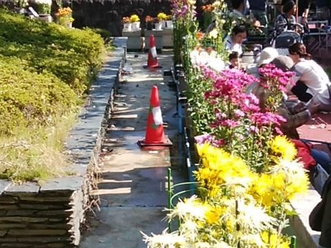 緑化センターの菊