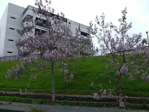 JR貨物ターミナルの花