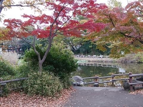 菊名池モミジ