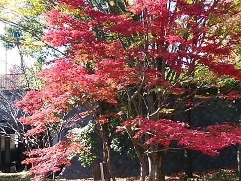 くさぶえのみち紅葉