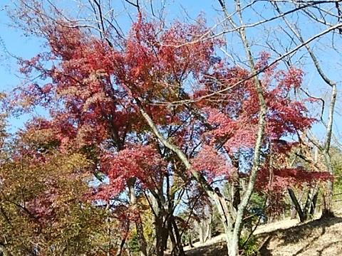 山田富士公園紅葉