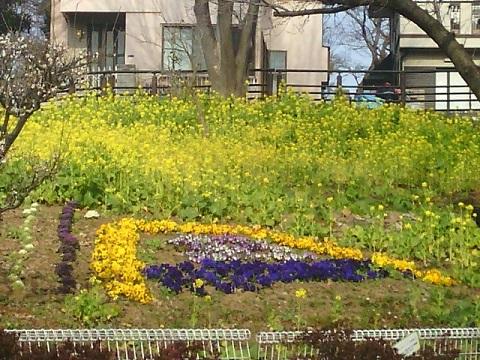 東高根公園菜の花畑