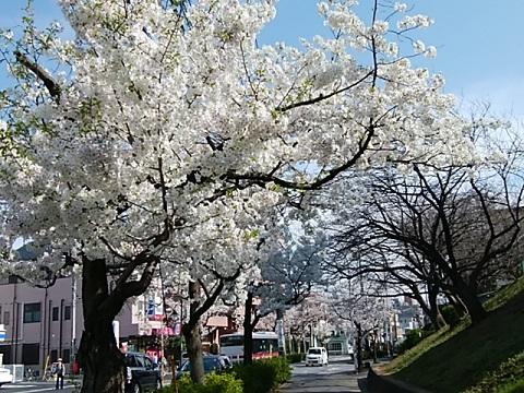桜台桜並木