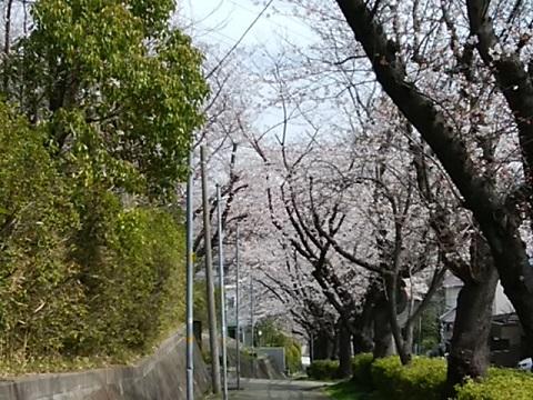 美しが丘中学校前