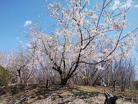 高田町の植木畑