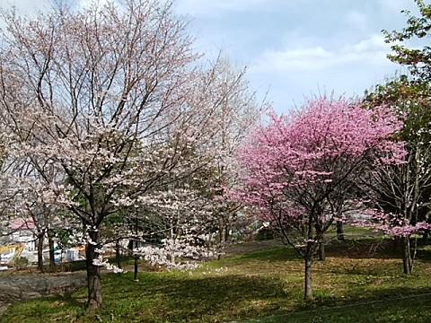 菅田みどりの丘公園