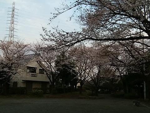 新田緑道新吉田広場