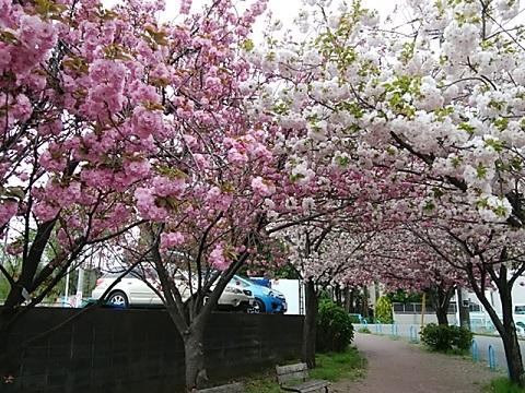 中丸子南緑道関山