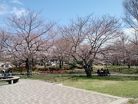 南河原公園桜