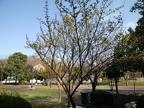 山田富士公園サンシュウ