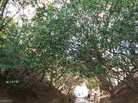 建功寺椿トンネル