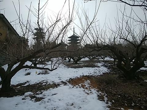 香林寺梅園