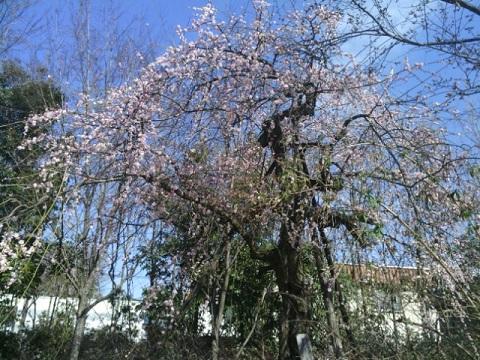 万福寺ふるさと緑地