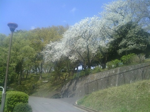 神の木公園