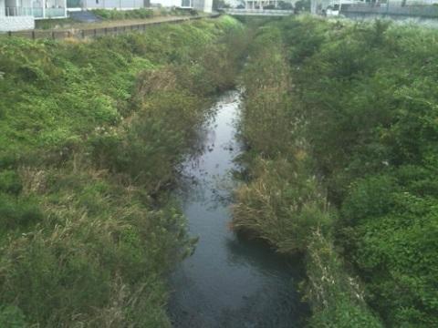 早淵川中流域