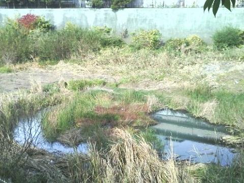 保木公園横の貯水池