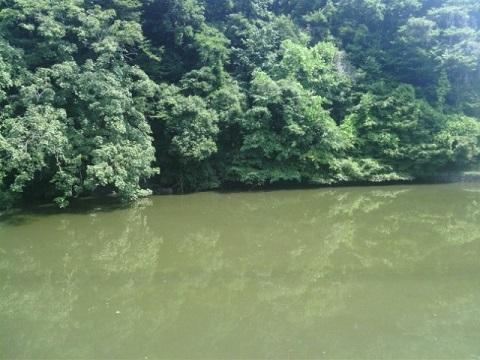 真光寺公園の池