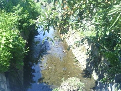 真福寺川中流