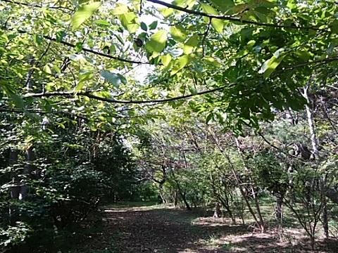 川崎区市民の森