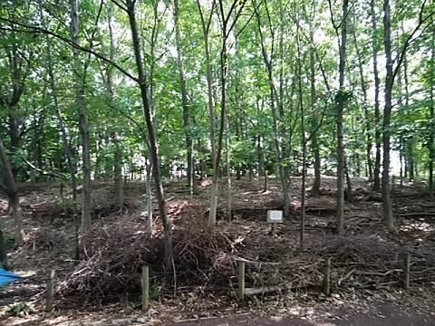さいわいふるさと公園の森